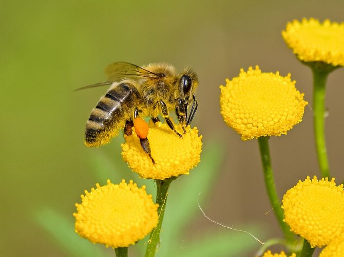Bee and Wasp Stings | Safety First Welling